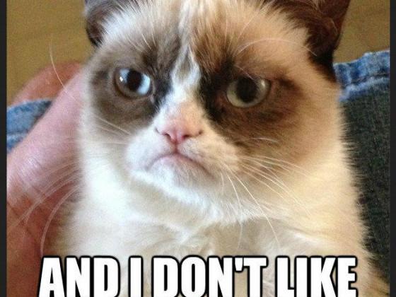 I like the cat....Not!